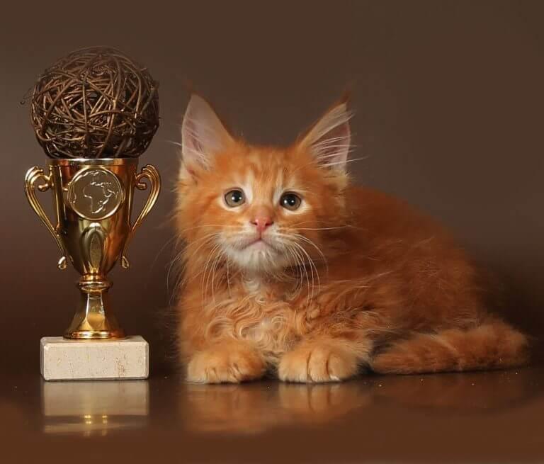 красный котик менй кун