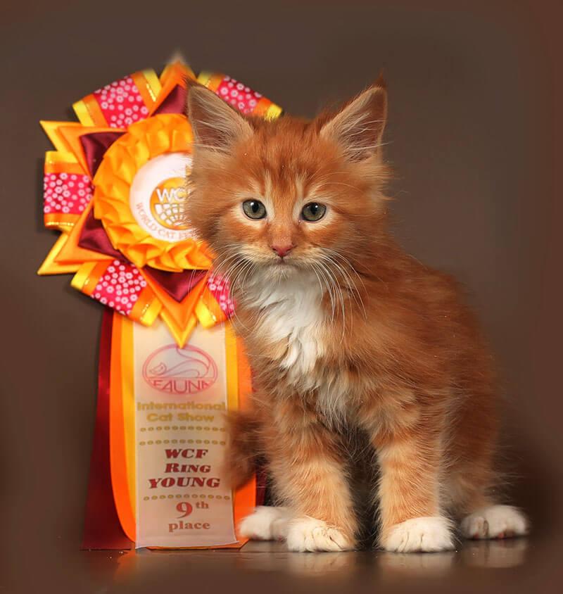 Мейн-кун Кошка №61 ПОМЕТ НА БУКВУ Д от 01.11.18г